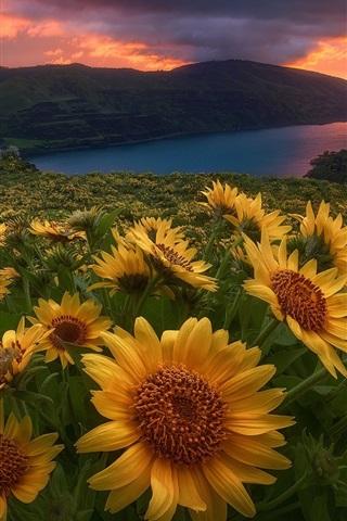 iPhone Wallpaper Yellow flowers, river, dawn