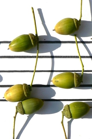 iPhone Wallpaper Acorn, music, leaves
