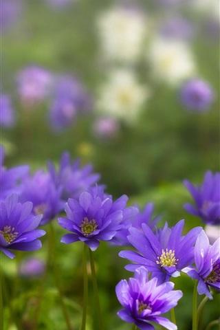 iPhone Wallpaper Anemone, blue flowers, petals