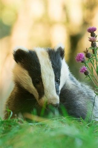 iPhone Wallpaper Animals, badger, grass, flowers