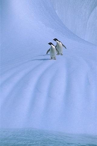 iPhone Wallpaper Antarctica, two penguins, ice