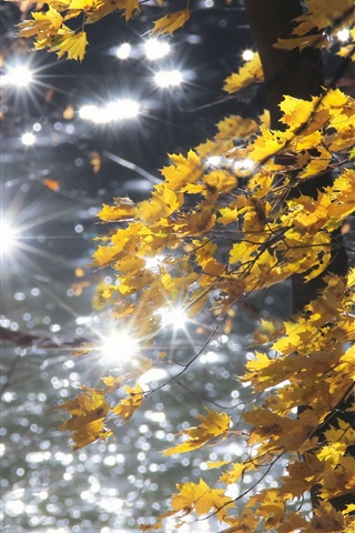 iPhone Wallpaper Autumn, forest, yellow leaves, glare