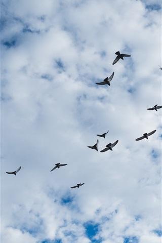 iPhone Wallpaper Birds flying, sky, clouds