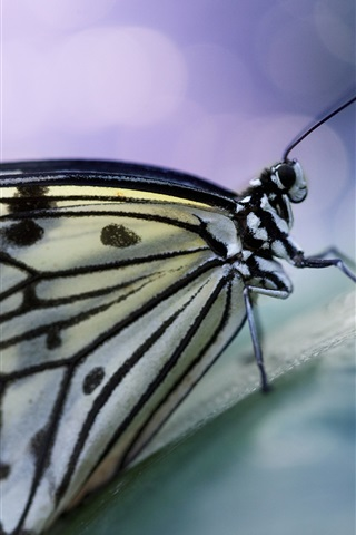 iPhone Wallpaper Butterfly, wings, antennae