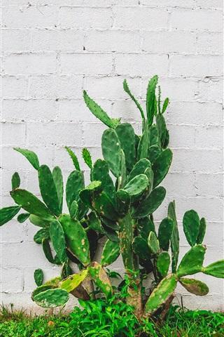 iPhone Wallpaper Cactus, green plants, wall