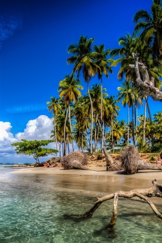 Wallpaper caribbean palm trees beach sea clouds dominican republic 1920x1080 full hd 2k - Wallpaper dominican republic ...