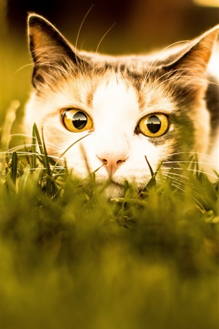 iPhone Wallpaper Cat rest in grass, face, look, eyes