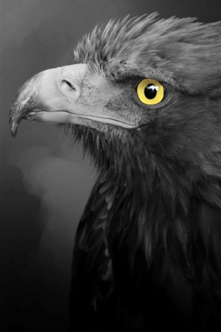 Eagle Black Feathers Yellow Eyes 640x1136 Iphone 5 5s 5c Se Wallpaper Background Picture Image