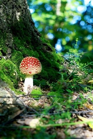 iPhone Wallpaper Forest, mushroom, moss, bokeh