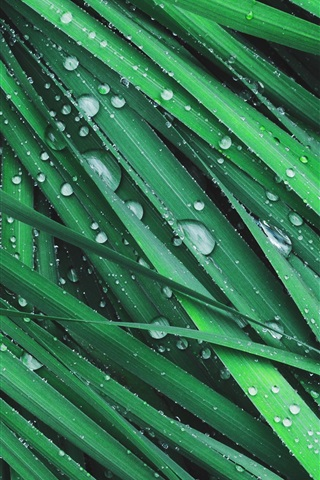 iPhone Wallpaper Grass, green leaves, dew, water drops
