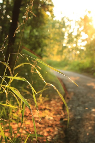 iPhone Wallpaper Grass, sunlight, road, trees, morning