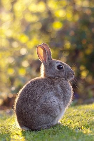 iPhone Wallpaper Gray rabbit, hare, grass, sunshine