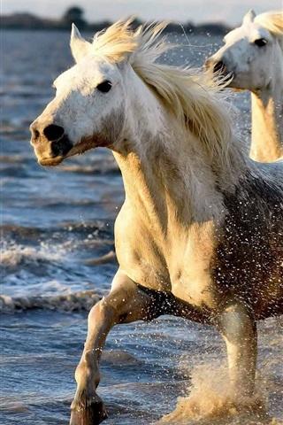 iPhone Wallpaper Horses running in water, splash