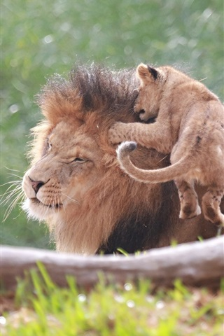iPhone Wallpaper Lion and baby