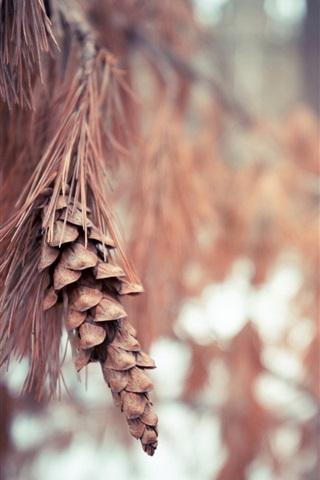 iPhone Wallpaper Nature, spruce, autumn, blurry