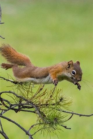 iPhone Wallpaper Squirrel jump, pine tree