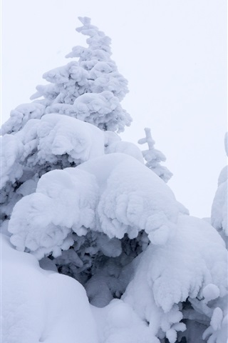 iPhone Wallpaper Thick snow, spruce, winter