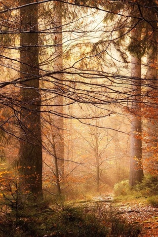 iPhone Wallpaper Trees, forest, sunlight, autumn