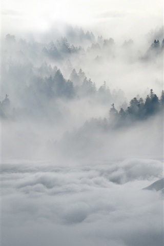 iPhone Wallpaper Two wolves, forest, fog