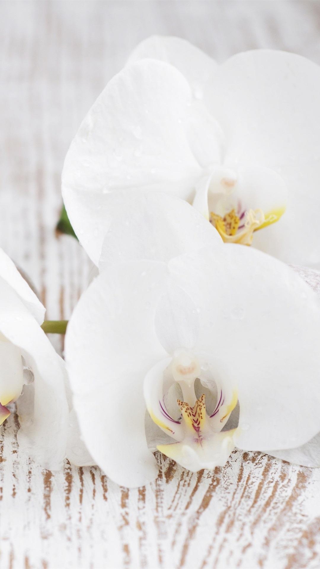 Weisse Orchidee Kiesel Blatter 3840x2160 Uhd 4k