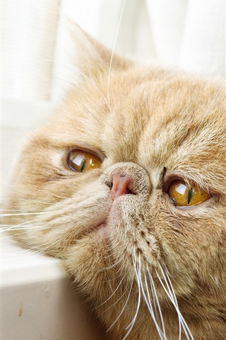 iPhone Wallpaper Yellow eyes cat, window