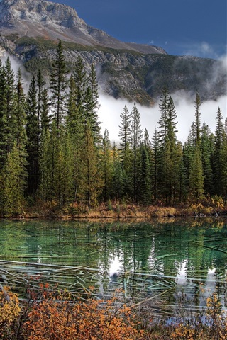 iPhone Wallpaper Banff National Park, lake, mountains, spruce, Canada