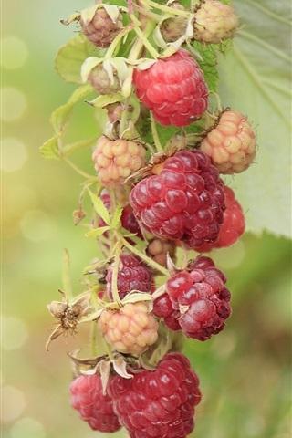 iPhone Wallpaper Berries, raspberry, branch, bokeh
