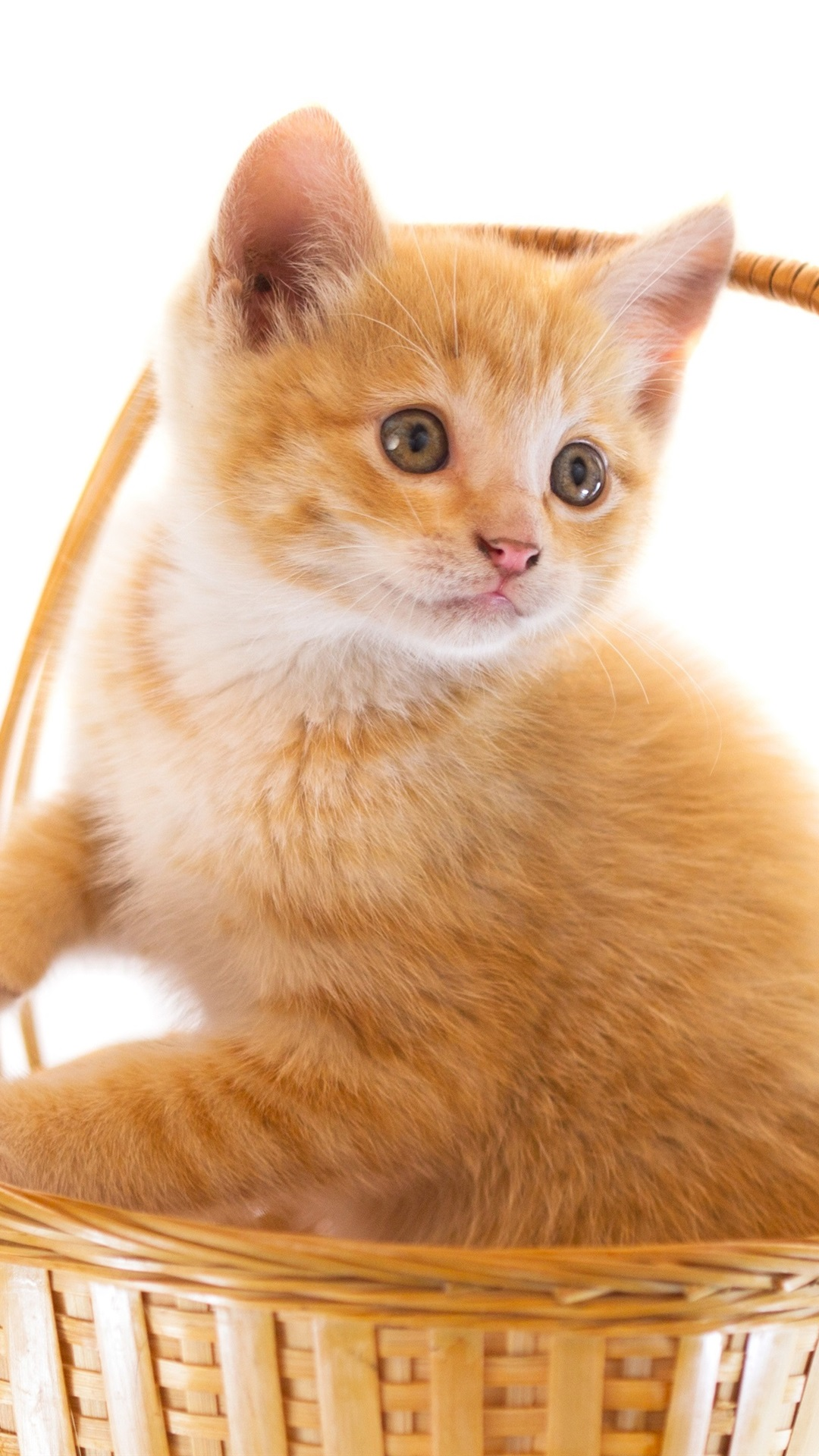 Cute Cats and Kittens Desktop Wallpapers Download at