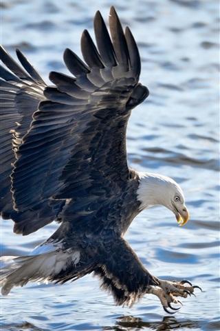 iPhone Wallpaper Eagle flight, wings, lake, water