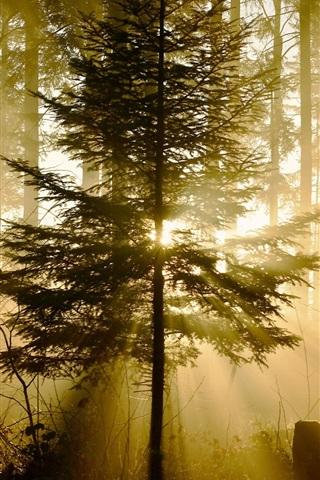 iPhone Обои Лес, деревья, солнечные лучи, природа