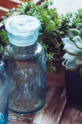 iPhone Wallpaper Houseplant, succulent plants, bottles