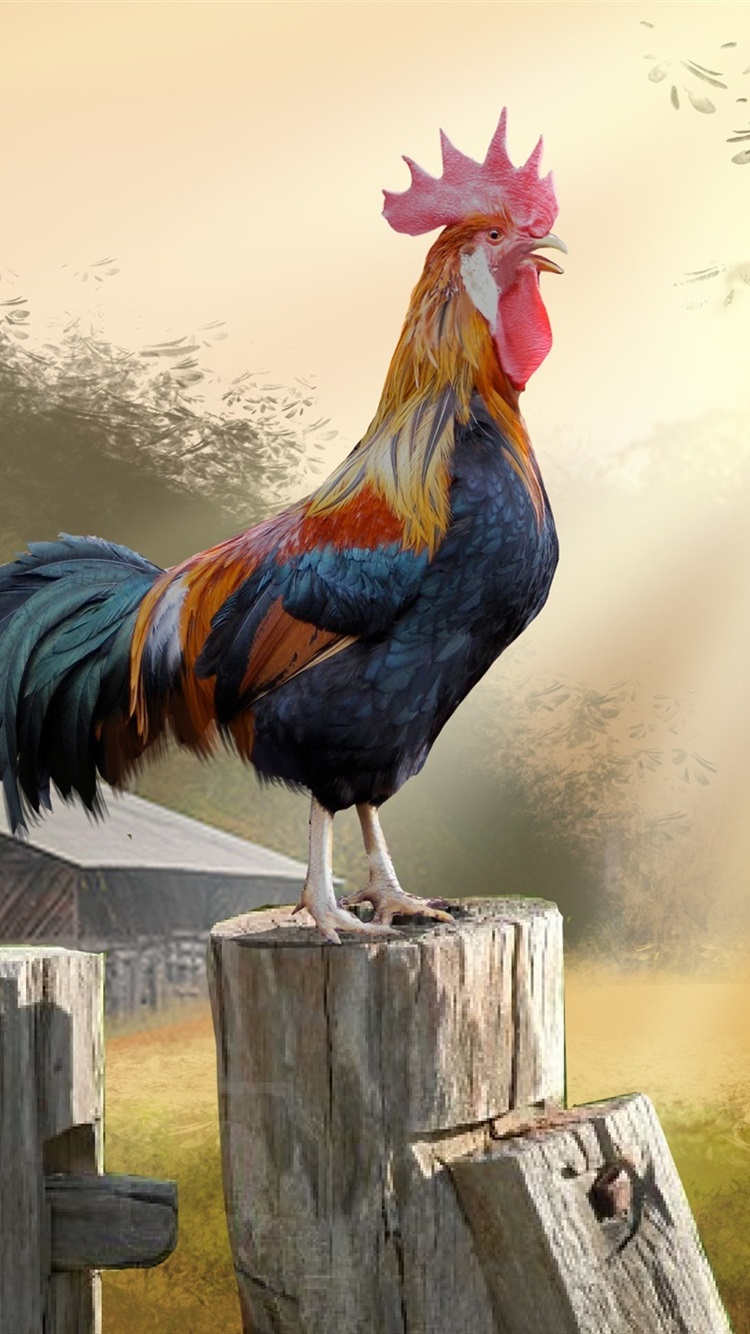 Wallpaper Morning Rooster Trees Hut Art Picture