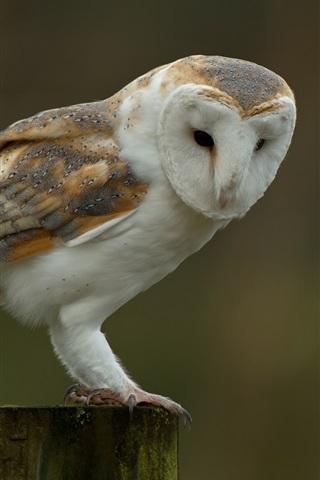 iPhone Wallpaper Owl, stump, bird