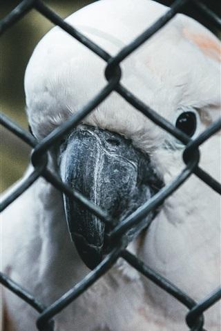 iPhone Wallpaper Parrot, beak, fence