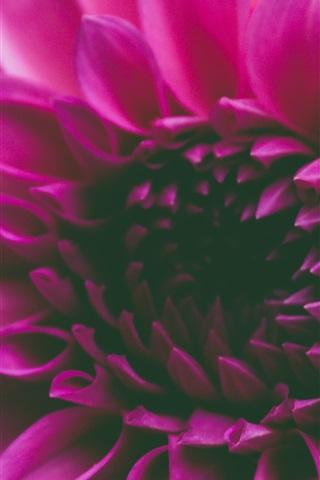 iPhone Wallpaper Pink petals flower macro