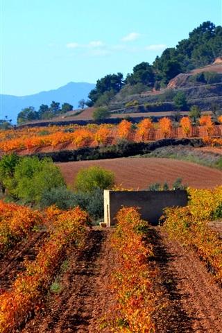 iPhone Wallpaper Spain, Catalonia, mountains, plantation
