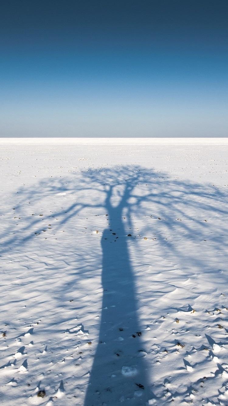 木の影 雪 冬 750x1334 Iphone 8 7 6 6s 壁紙 背景 画像