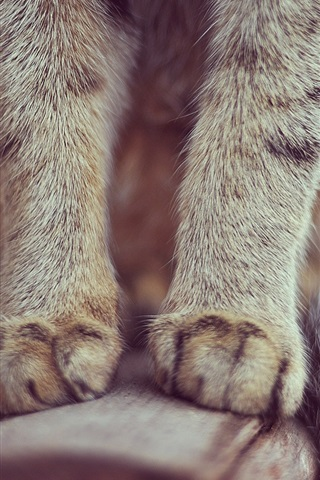 iPhone Wallpaper Cat paws