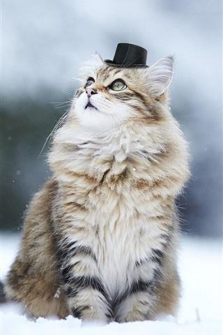 iPhone Wallpaper Cute kitten, hat, humor