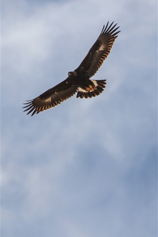 iPhone Wallpaper Eagle flight in the sky, wings, clouds