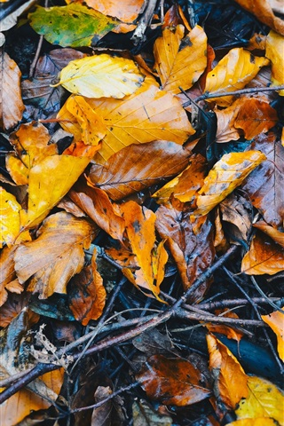 iPhone Wallpaper Fallen foliage on ground, wet