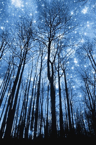 iPhone Wallpaper Forest, beautiful blue starry, night