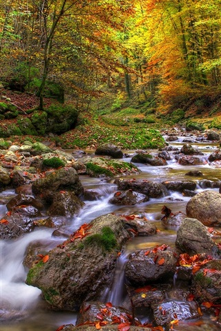 iPhone Wallpaper Forest, streams, stones, water, autumn