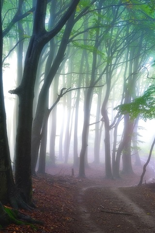 iPhone Wallpaper Forest, trees, path, fog, nature scenery