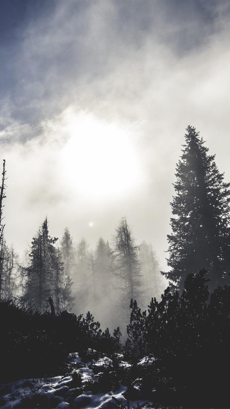 Обои елка, туман, утро. Природа foto 10