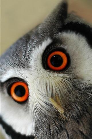 iPhone Обои Пушистая сова, глаза, взгляд