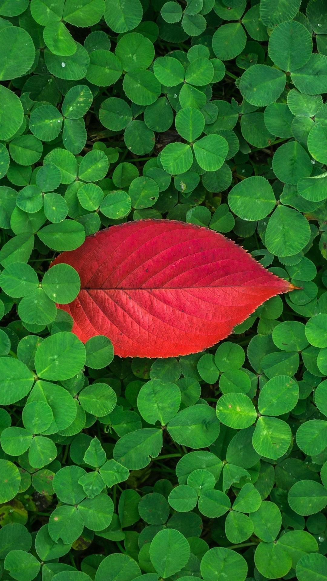 緑のクローバー 赤い葉1枚 1080x1920 Iphone 8 7 6 6s Plus 壁紙