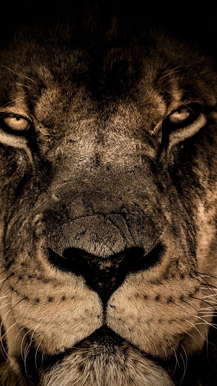 8k Animal Wallpaper Download: Wallpaper Lion Face, Predator, Look, Wildlife 3840x2160