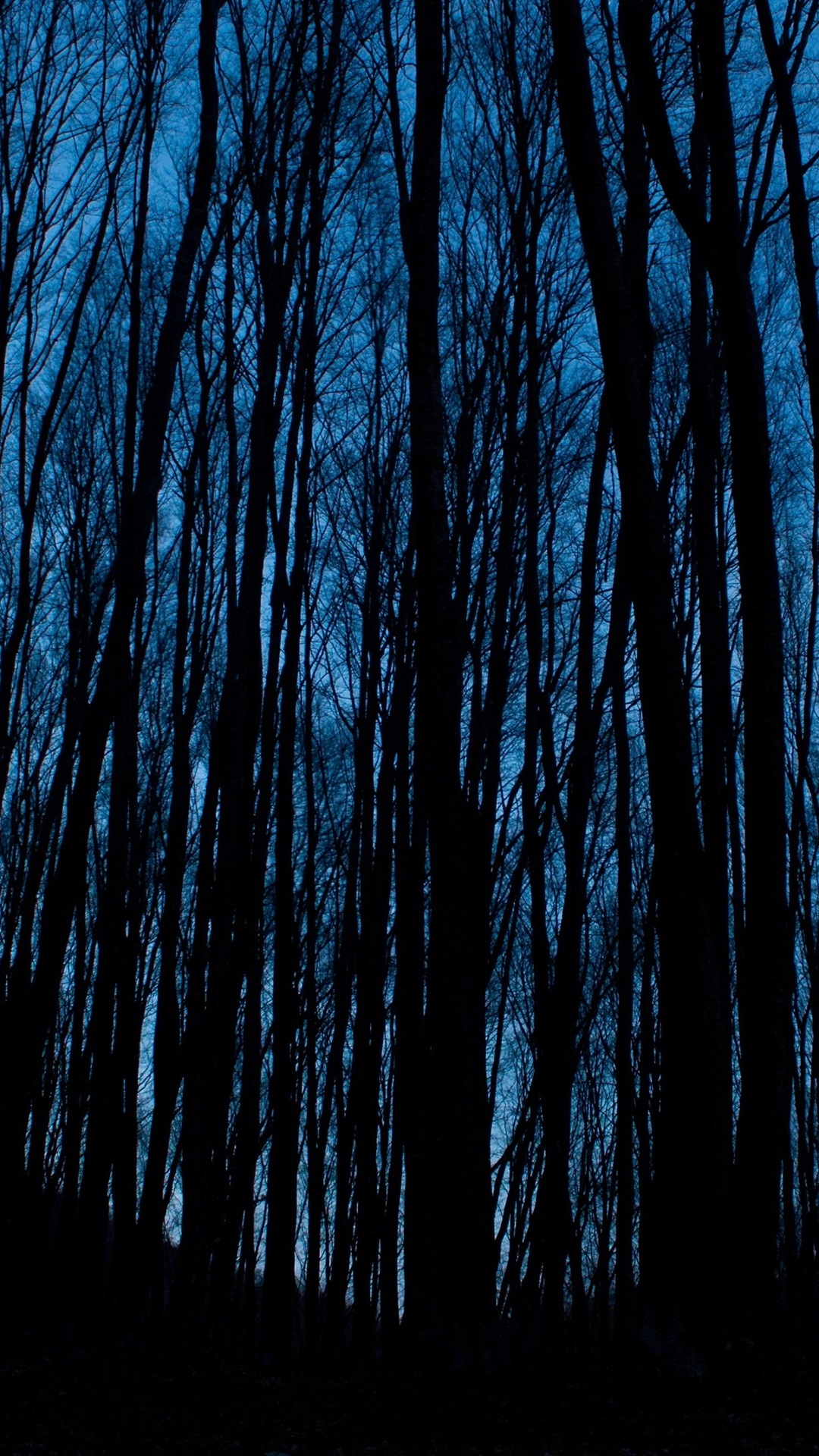 Wallpaper Night Forest Trees Darkness 3840x2160 Uhd 4k Picture Image