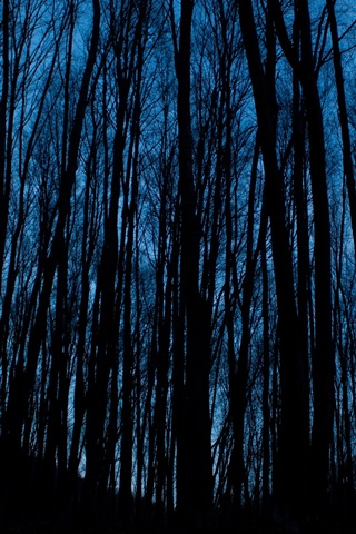iPhone Wallpaper Night, forest, trees, darkness